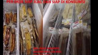 WA 0816 328 6451 Indosat Jual Hasil Bosan Jadi Pegawai Eps Budidaya Ikan Sidat Makanan Jepang