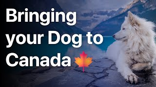 Bring your Dog to Canada