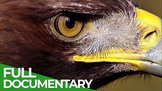 The Golden Eagle: Raptor of the Skies | Free Documentary Nature