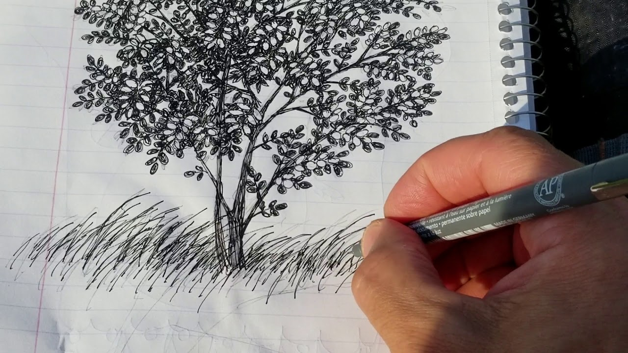 Sketching A Black Locust Tree