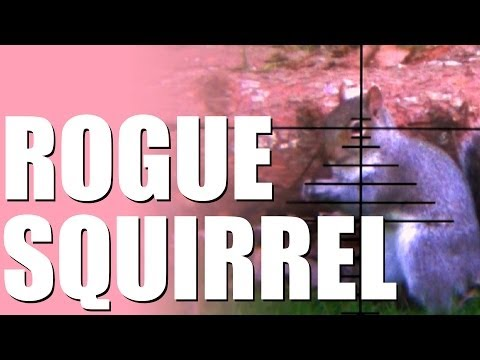 Rogue squirrel! How to shoot pests with a pellet gun in your back garden