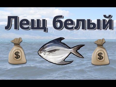 Русская Рыбалка 3.99 (Russian Fishing) Лещ морской белый на Северном свале