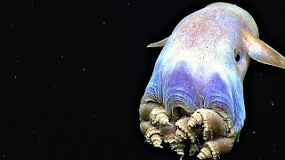 16 Bizarre Creatures Discovered in the Mariana Trench