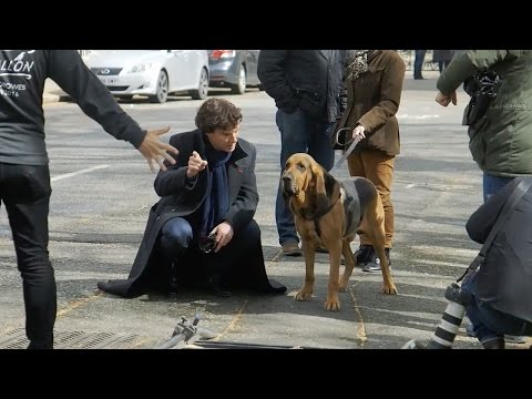 Filming With The Dog   Sherlock