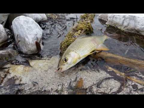 Il pesce nel russo di pescare in 3 Klyazma