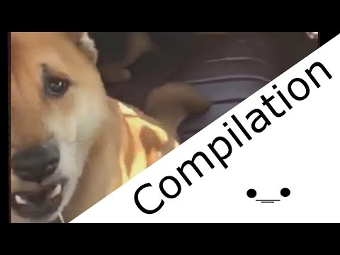 Dog Barking Compilation #1