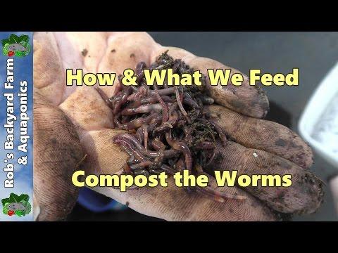 Pagpapayaman ng fecal worm paraan egg