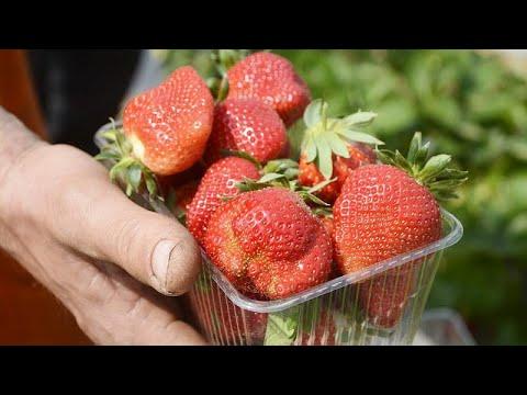 50χρονη συνελήφθη για τις βελόνες στις φράουλες