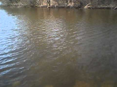 Pond Bass Fishing With Flukes