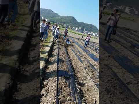 在 YouTube 上觀看 ☆香港有機農友會 ☆2017年11月17日惠東薯仔考察團「馬鈴薯種植新方法」 – 日豐有機農場