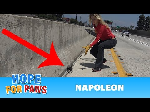 WHY???  Why would anyone throw a kitten on the freeway??? Please share.