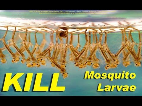 Hugas parasites mula Sochi