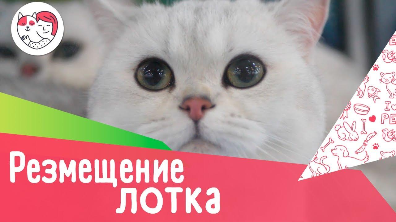 4 правила размещения кошачьего лотка