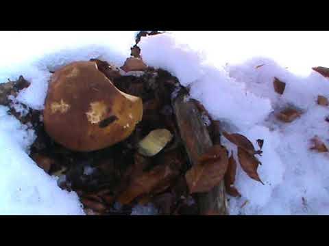 Unguenti da un fungo a gravidanza