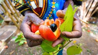 Rastafari Village Food 🇯🇲 100% ITAL FOOD + Jamaican Herb Tour 🌿 with Rasta I-Win!