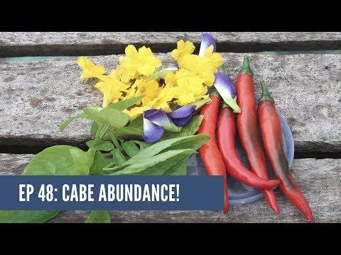 EP. 48: Panen Cabe & Makan Herb di Kebun