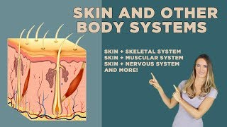 The Skin and Other Organ Systems: Skeletal, Nervous, Endocrine, Cardiovascular + More!