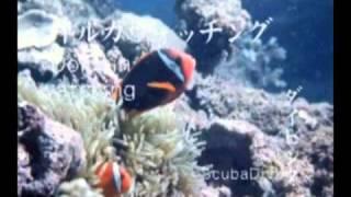 熊本観光PRビデオ天草編&阿蘇編