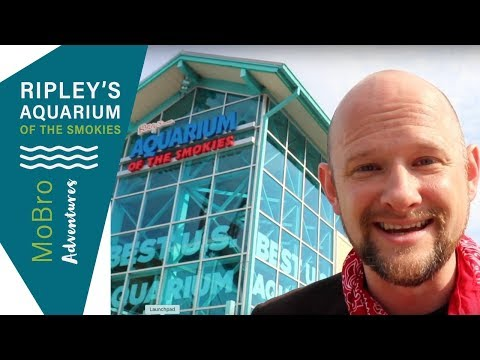 Ripley's Aquarium of the Smokies Adventures