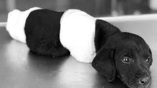 Bir insan neden yavru köpeğin bacaklarını keser ?