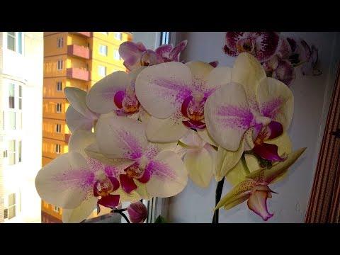 Мои орхидеи!