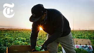 'Essential' Farmworkers Risk Infection and Deportation. Here's Why. | Coronavirus News