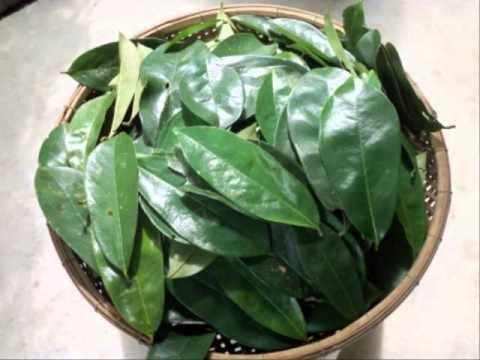 ผลไม้ Sophora ในโรคสะเก็ดเงิน