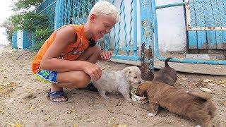 Влог Нашел бездомных щенков Путешествия для детей 2018