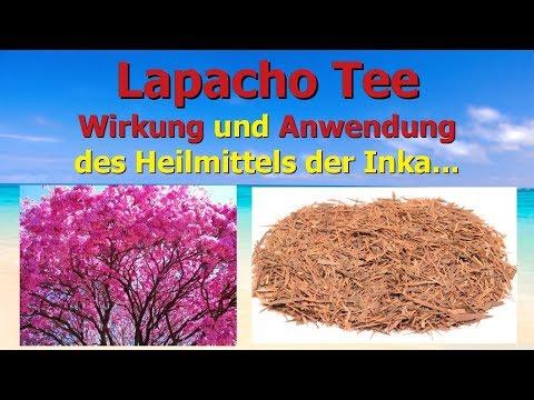 Lapacho Tee - Wirkung und Anwendung des Heilmittels der Inka