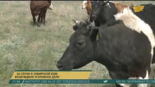 В Карагандинской области за слухи о сибирской язве возбуждено уголовное дело