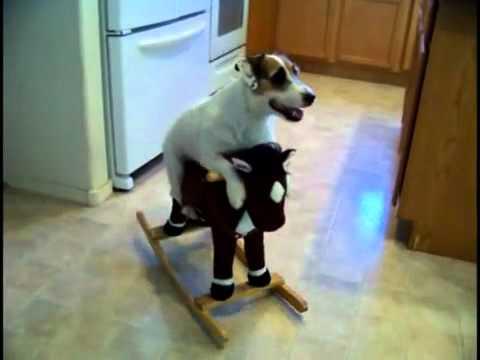 Huikean taitava koira!