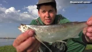 """Рыбалка на Чехонь,""""Саблю"""".Рыбалка Водоналивным поплавком (Бомбарда)"""