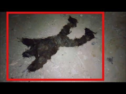 ЧТО ЭТО ЙЕТИ ИЛИ СТРАННОЕ СУЩЕСТВО В ПЕЩЕРЕ НА УРАЛЕ. загадочные существа снятые на видео. бигфут