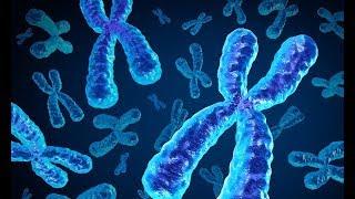 Cytogenetics