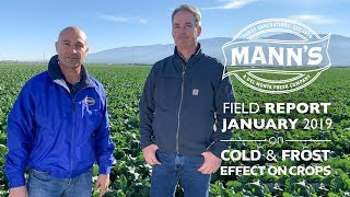 Field Report | January 2019 - Cold & Frost Effects on Crops