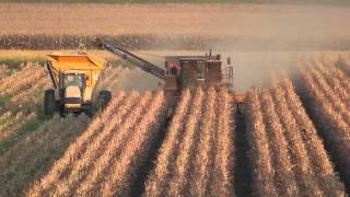 NTR & Syngenta seed corn harvest 2011