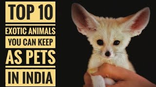 Top 10 Exotic Animals You Can Keep As Pets In India.