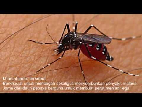 Video Buat jaga2, Anda harus tahu cara mengobati penyakit malaria