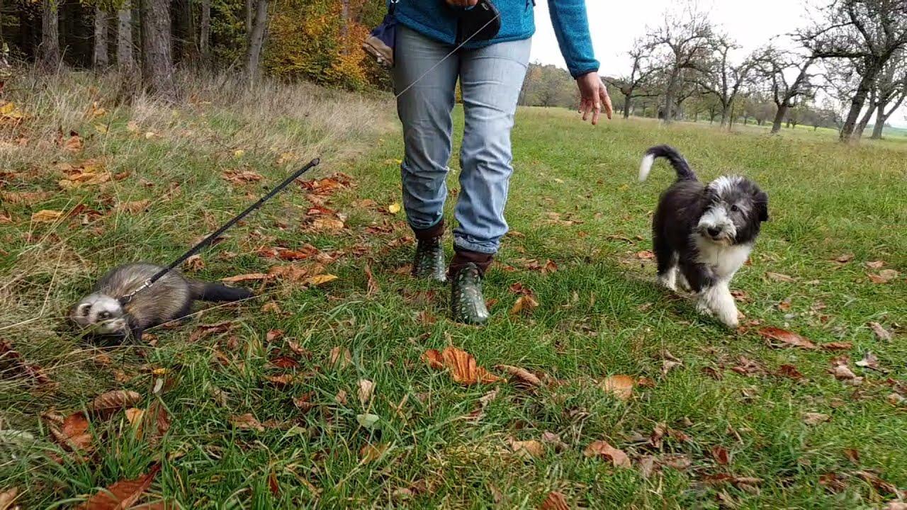 Spaziergang mit Klein-Chucho und Timón