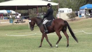 Jennifer Burk & Ole's Qwest at Greenwood Farm Fall Horse Trials 2014