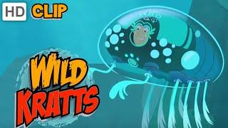 Wild Kratts - Starfish Power