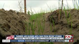 Farmers are blessed with rain from recent storms