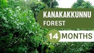 Miyawaki Model Forest at Kanakakkunnu After Fourteen Months