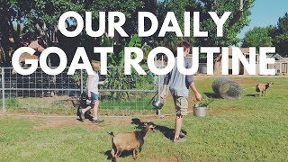 Raising Goats: Our Daily Goat Routine