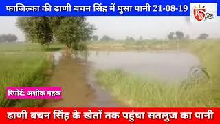 Fazilka: ढाणी बचन सिंह में घुसा सतलुज का पानी 21-08-19