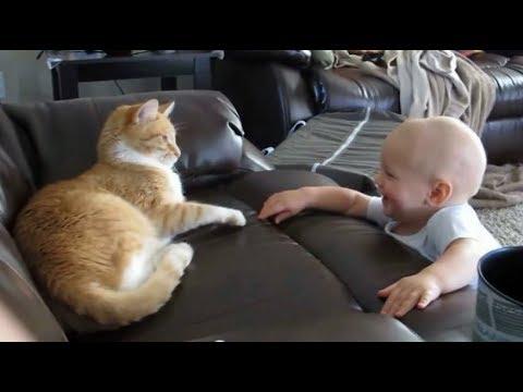 Las Mascotas Adoran a Nuestros Bebés y Saben Demostrarlo