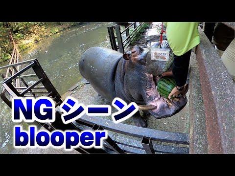 カバのスイカ丸ごとタイムNGシーン Hippo eating watermelon not well #shorts