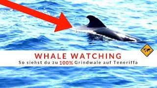 Grindwale und Delfine auf Teneriffa endecken