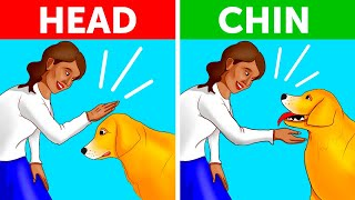 How to Approach a Dog the Right and Safe Way