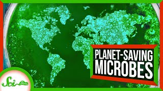 6 Microbes Saving the Environment